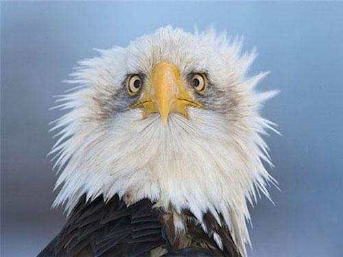 орел-сша